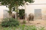 Elephant_as
